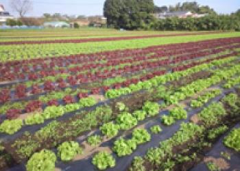 新規農業者の農場