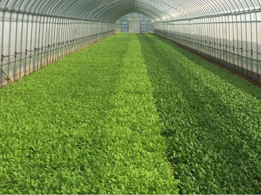 年間100t生産できる農場